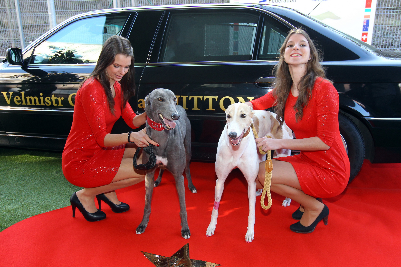 Chrtí Oskaři v Greyhound Park Motol Praha