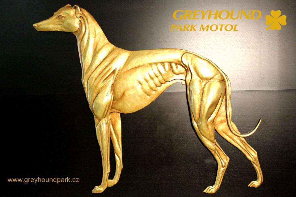 Zkuste závodního greyhounda - chrta s minulostí