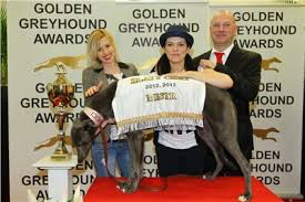 GREYHOUND OSKARS - GOLDEN GREYHOUND AWARDS 2014