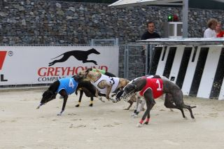 Chrtí dostihy CZECH INTERNATIONAL DERBY 2016